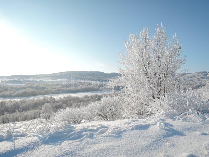 Magiskt vinterlandskap Dal med dentäckte skogen exponerad av den ljusa solen royaltyfri fotografi