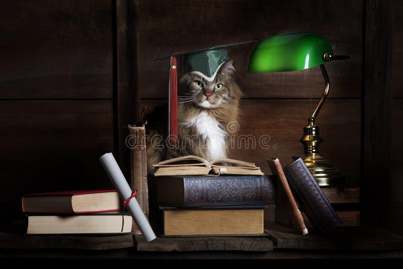 Magisterski studiowanie kot obrazy royalty free