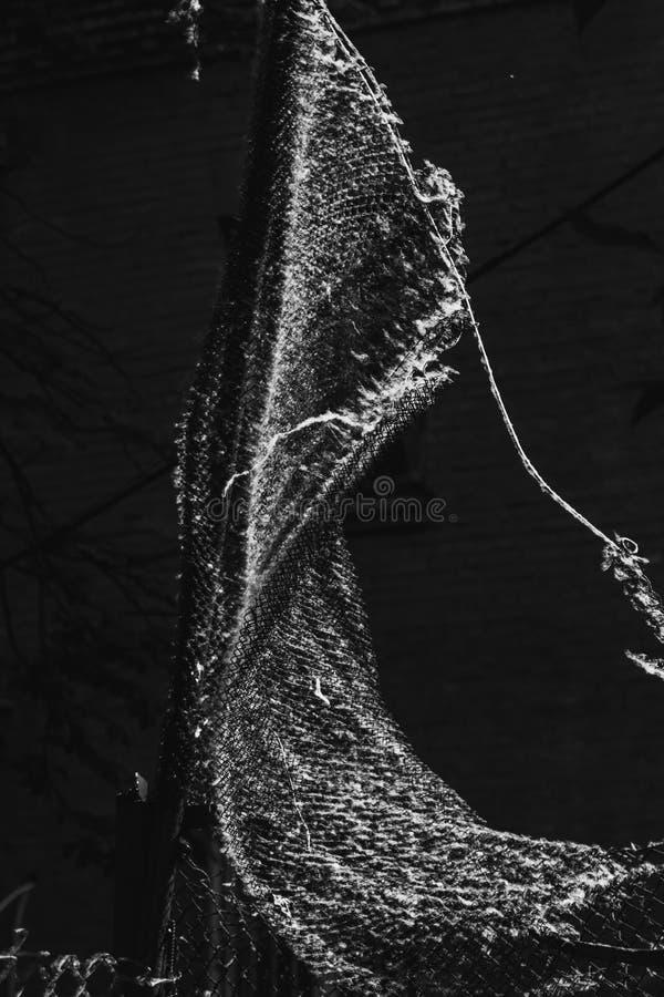 Maglia metallica tessuta torta coperta di pioppo giù su un primo piano vago del fondo allergeni sulla via di estate copia fotografie stock