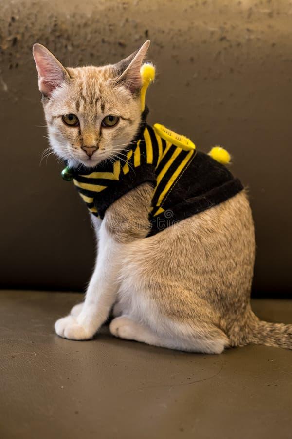 Maglietta degli articoli del gattino immagini stock
