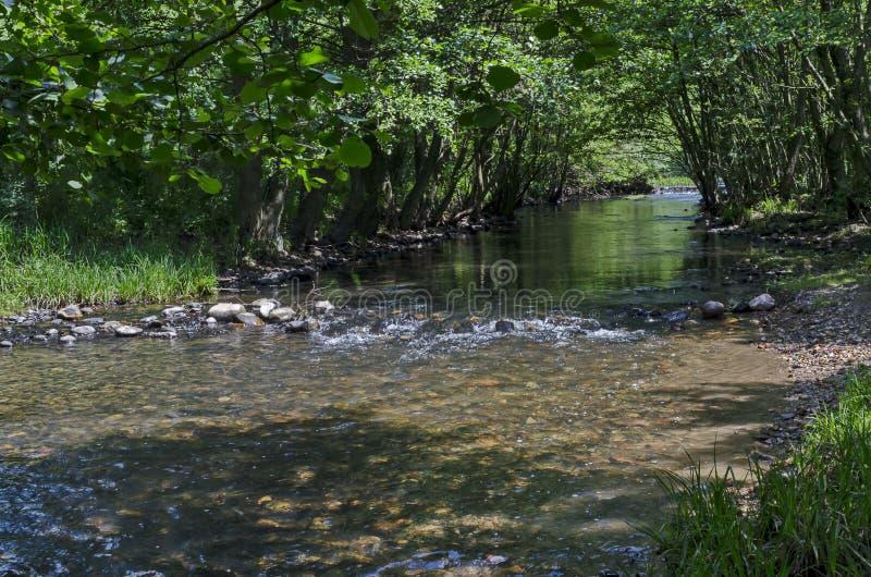 Magnetisch landschap van de zomeraard, groene vergankelijk bos en rivier Iskar met doorwaadbare plaats in de Lozen-berg royalty-vrije stock afbeelding