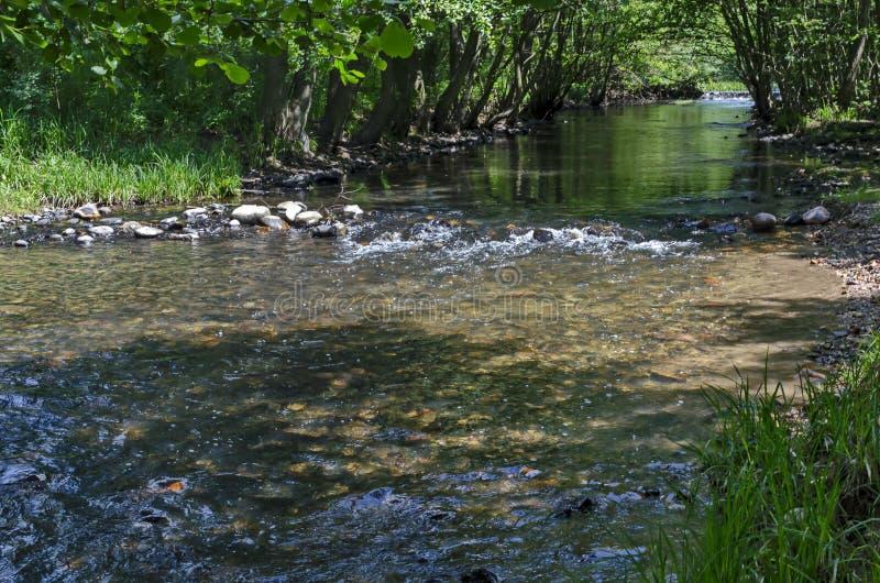Magnetisch landschap van de zomeraard, groene vergankelijk bos en rivier Iskar met kleine waterval in de Lozen-berg stock afbeelding