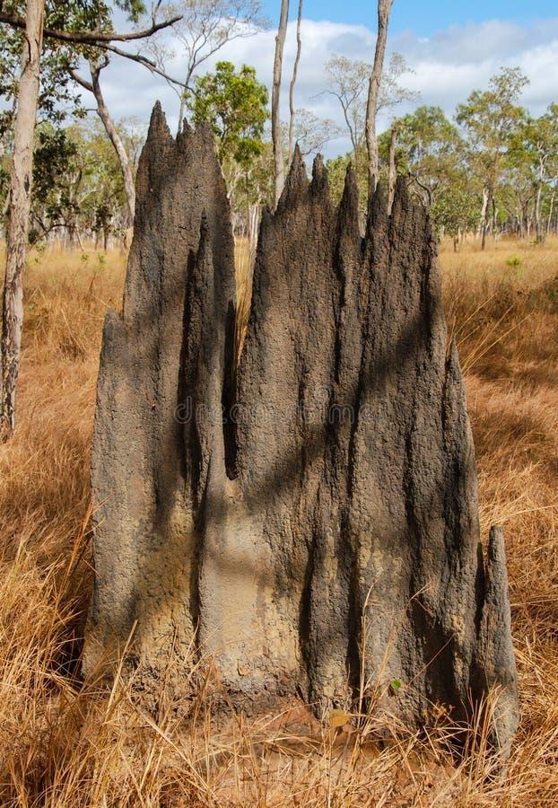 Magnetischer Termiten-Hügel Queenslands, Australien stockbild
