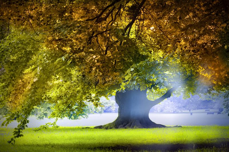 Magnificent ancient oak tree on the field stock photos