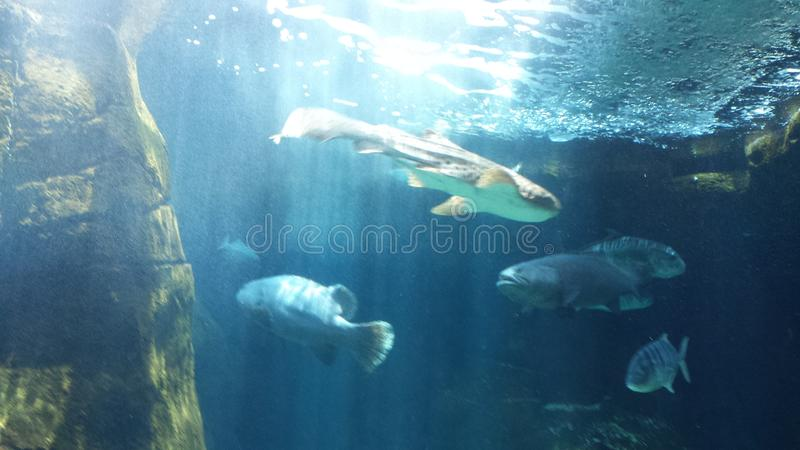 Magnificent fish royalty free stock image