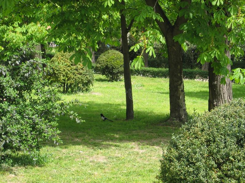 Magnificent garden in Madrid, Spain royalty free stock images