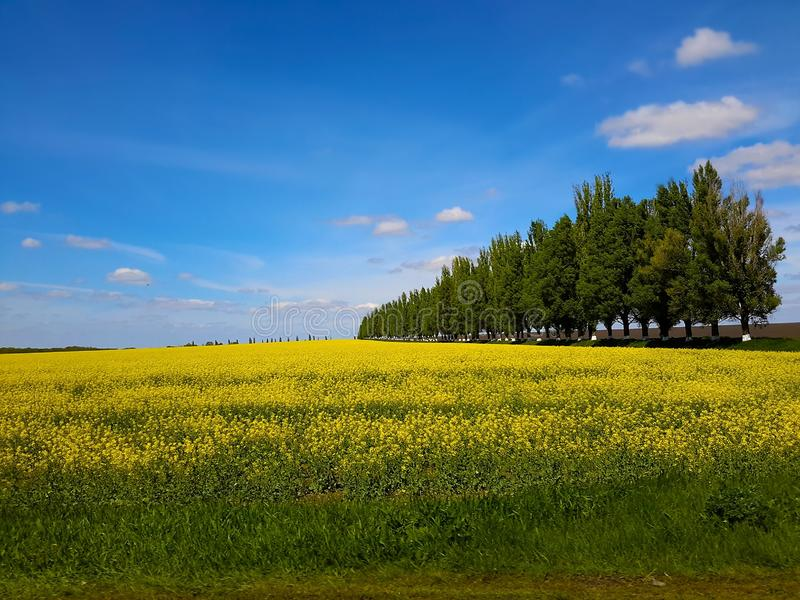 Magnificent landscapes of Ukraine. Vast fields, give an opportunity to enjoy the beauty of nature. There are endless possibilities of the agricultural sector royalty free stock image