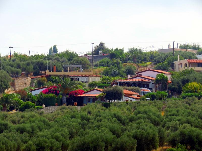 The magnificent olive gardens of Crete stock image