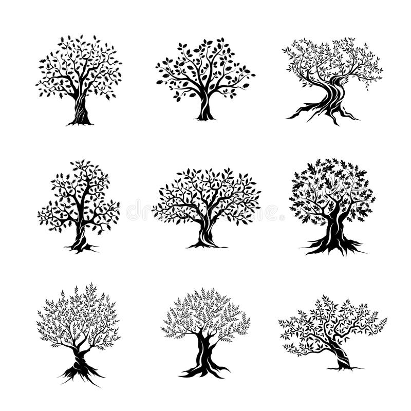 Magnificent olive and oak trees silhouette royalty free illustration