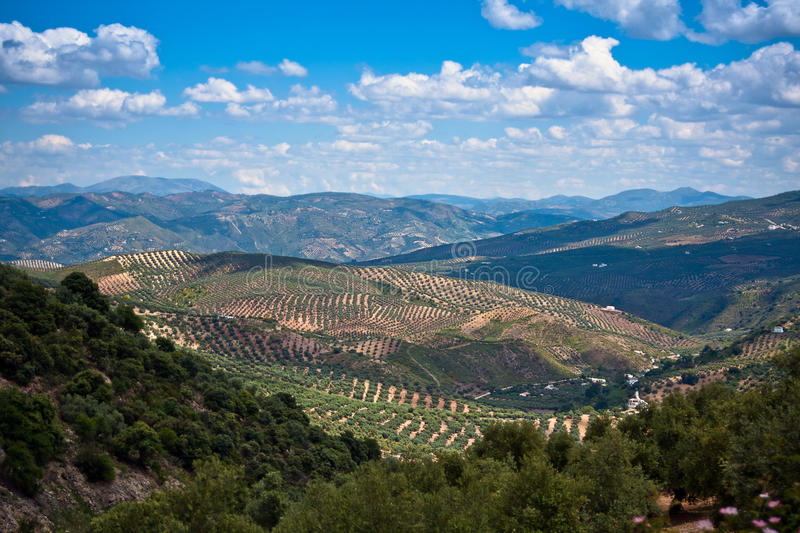 Download Magnificent Panorama Of Surrounding Olive Stock Photo - Image: 21980564