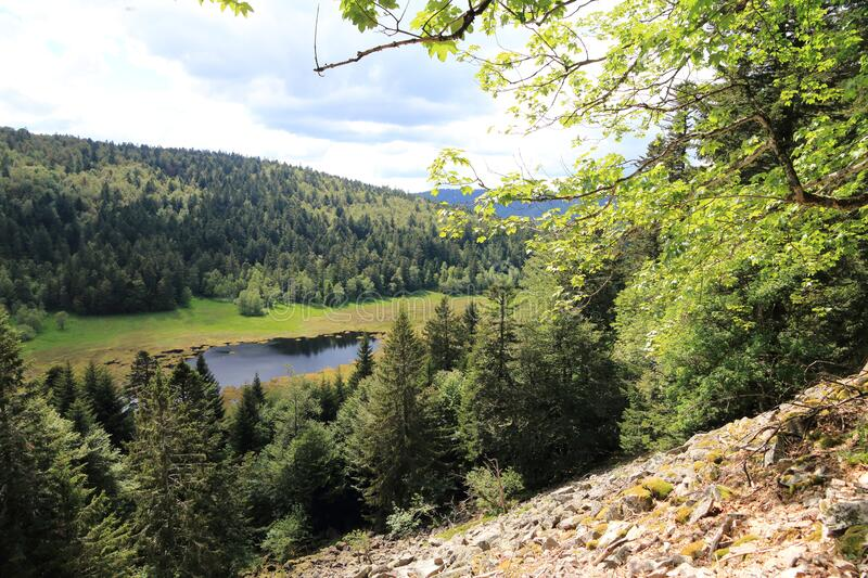 Machais peat bog in the Vosges royalty free stock photos
