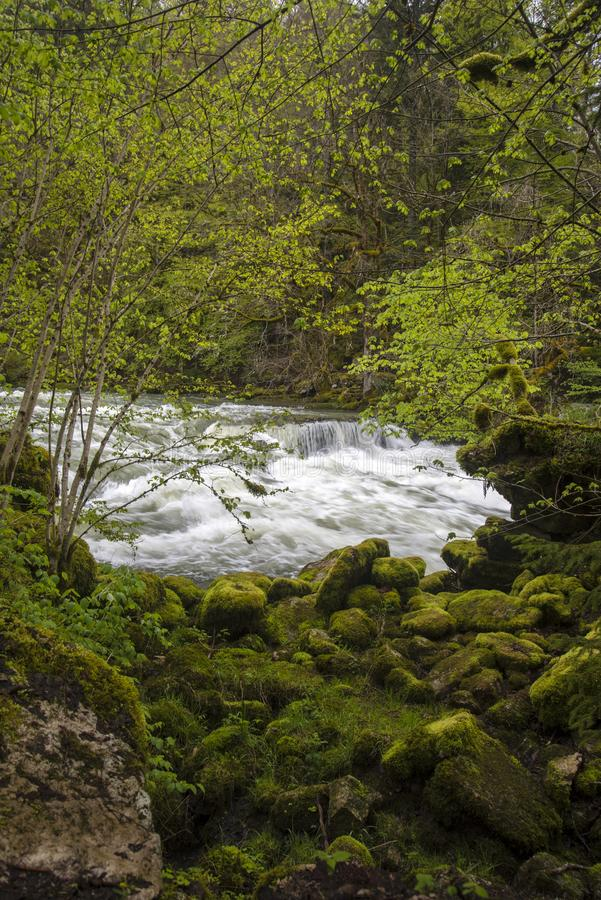Magnificent river into the forest stock photography
