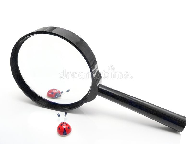 Magnifier com duas joaninha fotos de stock