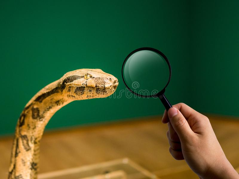 Magnifier i wąż przewodzimy, zoo i edukaci pojęcie obrazy stock