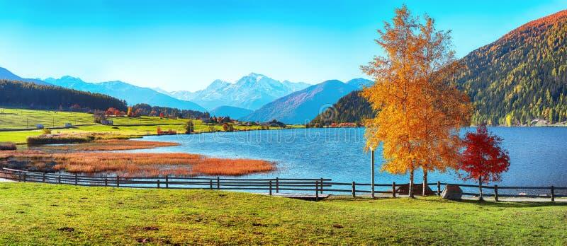 Magnifique panorama d'automne sur le lac de Haidersee Lago della Muta avec le pic d'Ortler en arrière-plan photos libres de droits