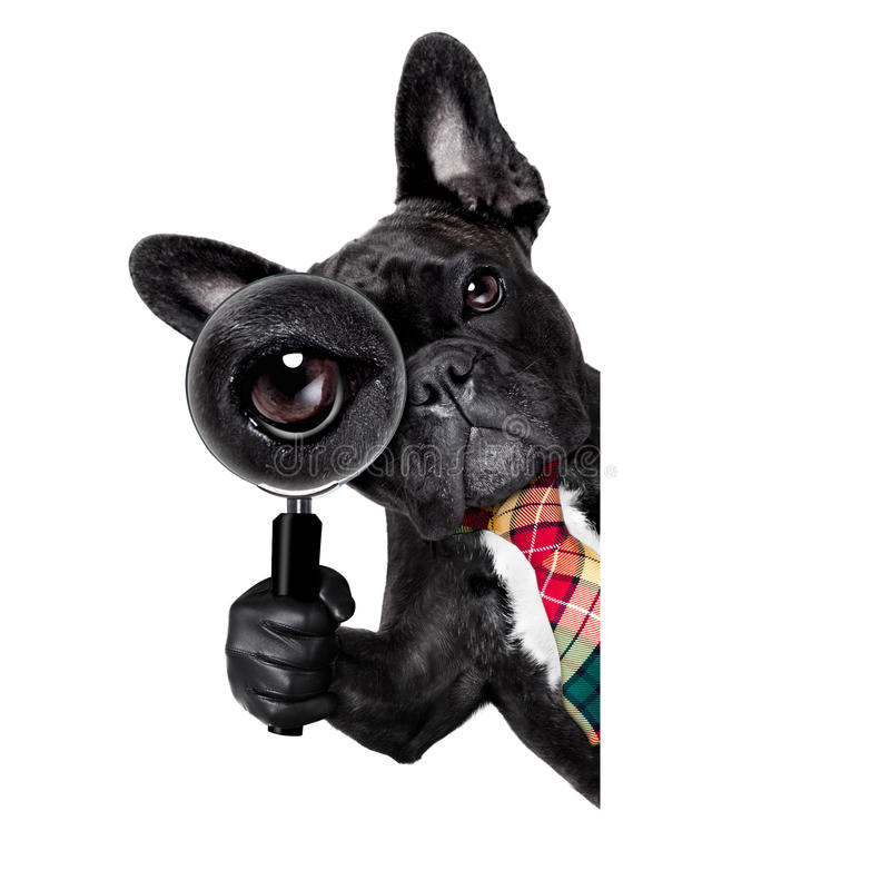 Magnifying glass dog stock image