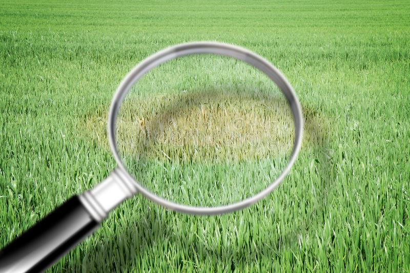 Magnifying glass with green grass background - Grass disease concept image stock photos