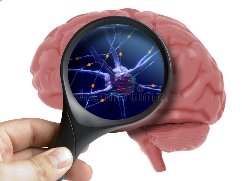 Magnifying glass on human 3d brain neurons activity isolated. On white royalty free stock images