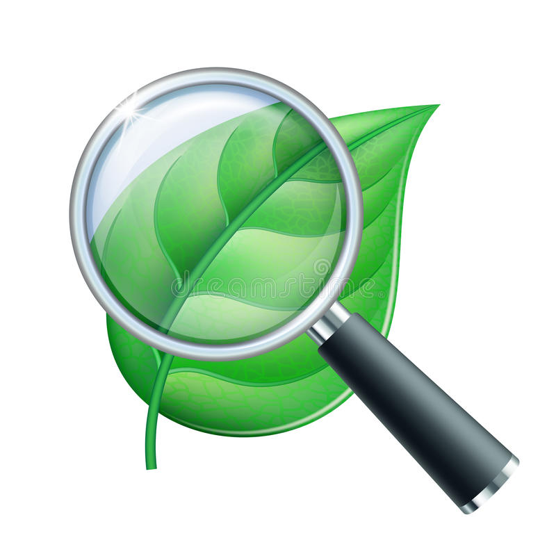 Magnifying glass and leaf stock vector. Illustration of ...