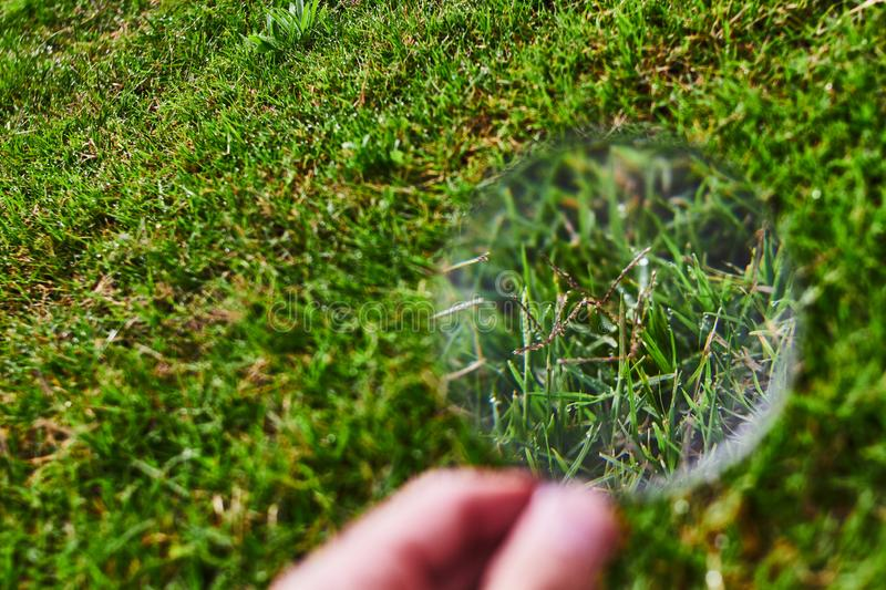 Magnifying glass observing the grass royalty free stock photo