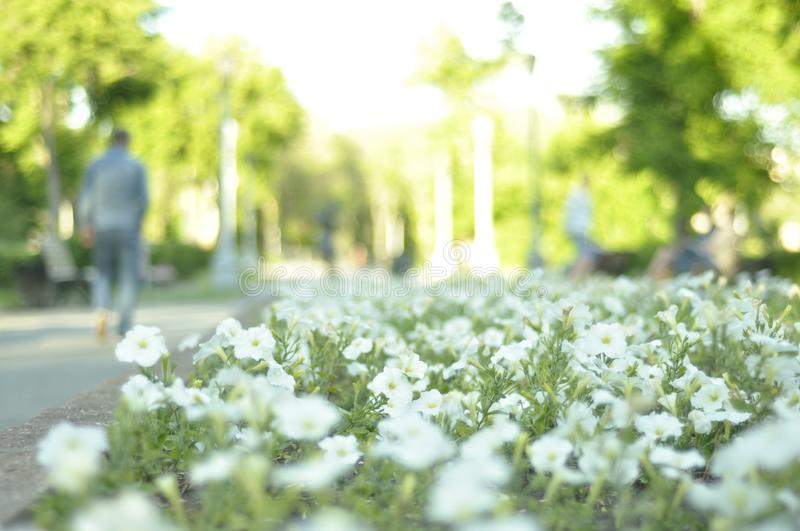 Magnitogorsk Russia  Summer Time Park flowers Dusk stock image