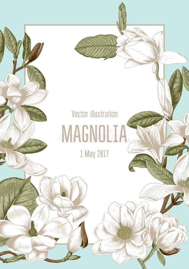 Magnolia Λουλούδια Διανυσματική απεικόνιση στο εκλεκτής ποιότητας ύφος χαιρετισμός λουλουδιώ οίστρο ανθίζοντας δέντρα απεικόνιση αποθεμάτων