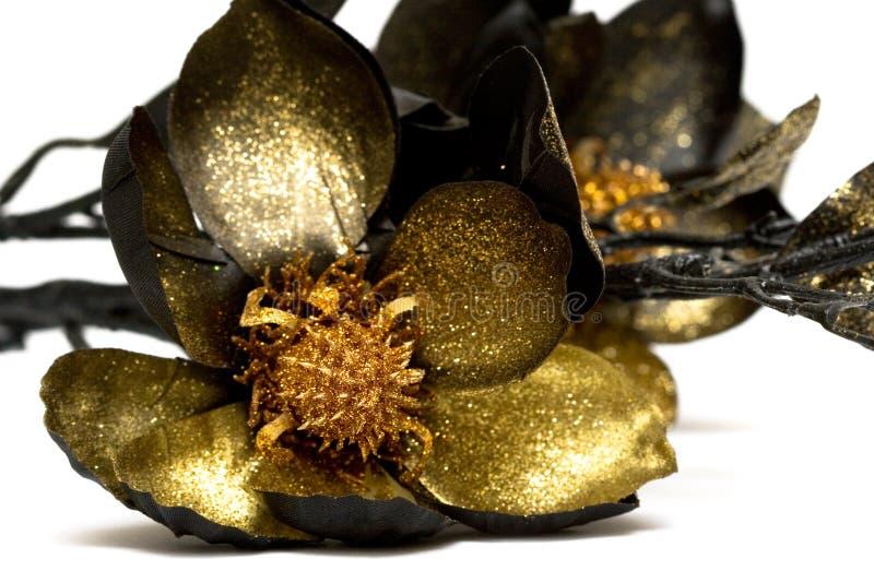 magnolia золота стоковая фотография