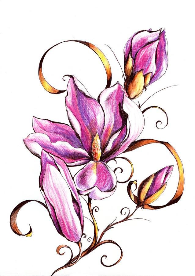 Magnolia vector illustratie