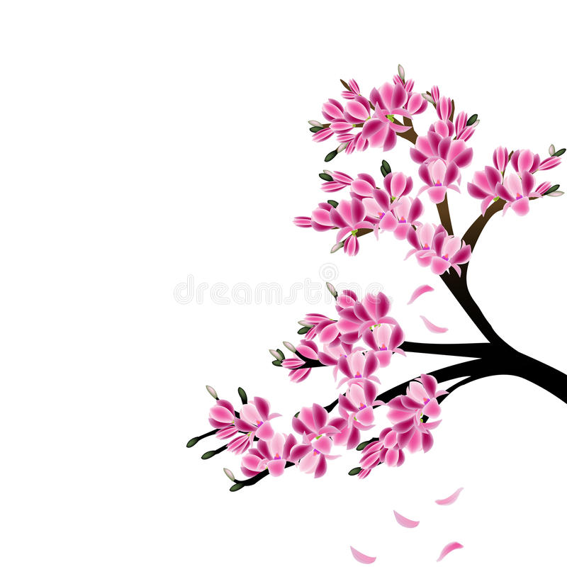Magnolia illustrazione di stock illustrazione di albero for Magnolia pianta prezzi