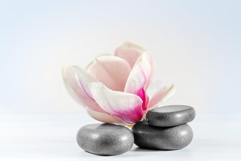 Download Magnolia. stock afbeelding. Afbeelding bestaande uit roze - 39111809