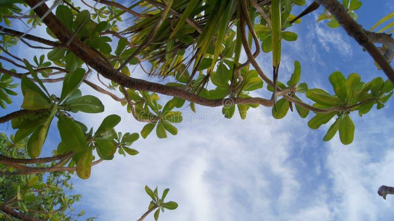 Magnolia images stock
