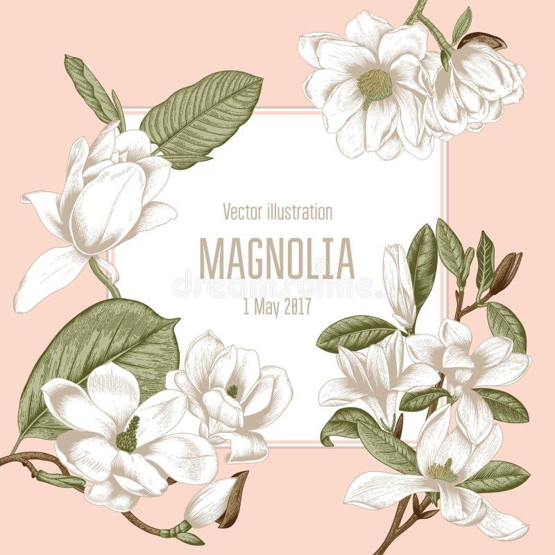 Magnolia Bloemen Vector illustratie in uitstekende stijl De Kaart van de groet met bloemen plantkunde Bloeiende bomen vector illustratie