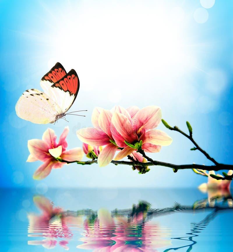 Magnolia del fiore e della farfalla immagine stock libera da diritti