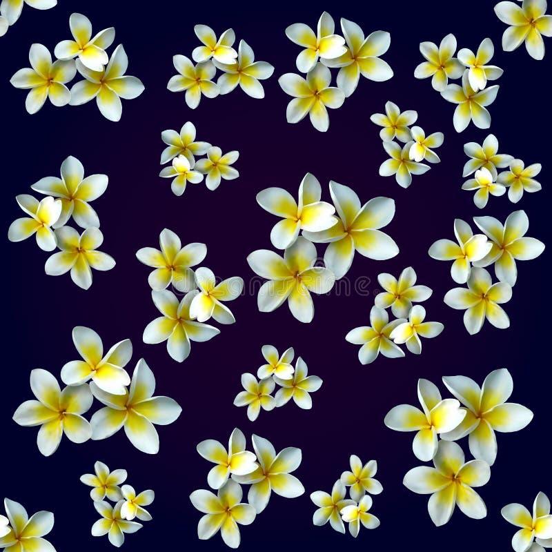 Magnolia del fiore Reticolo immagini stock