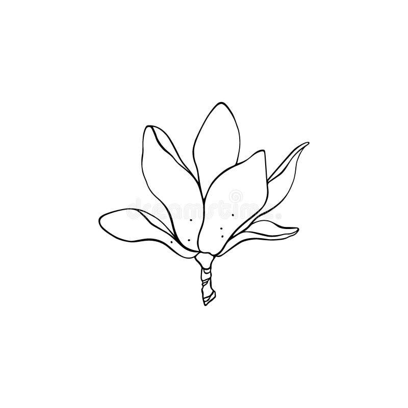 Magnolia dibujada mano ilustración del vector