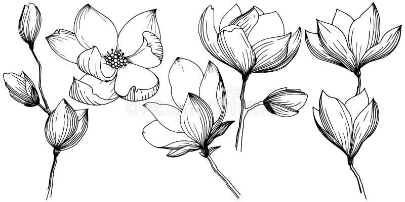 Magnolia en un estilo del vector aislada ilustración del vector