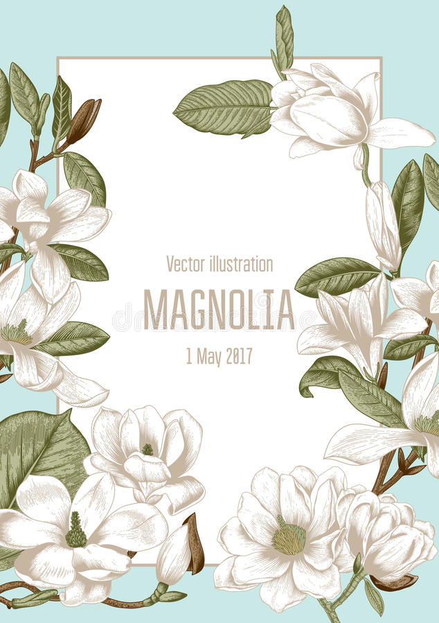 Magnolia Flores Ejemplo del vector en estilo del vintage Tarjeta de felicitación con las flores botánica Árboles florecientes stock de ilustración