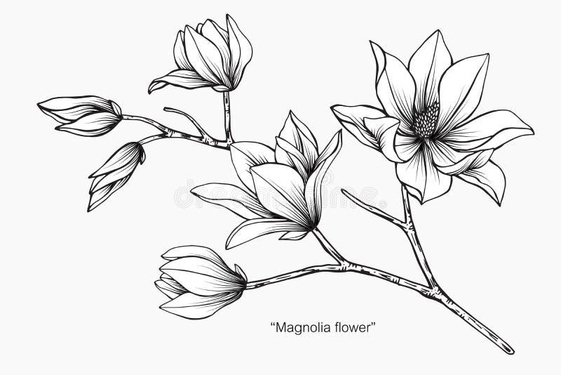 Magnolia flower drawing illustration. Black and white with line art. Magnolia flower drawing illustration. Black and white with line art on white backgrounds royalty free illustration