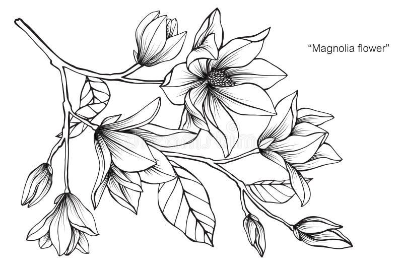 Magnolia flower drawing illustration. Black and white with line art. Magnolia flower drawing illustration. Black and white with line art on white backgrounds vector illustration