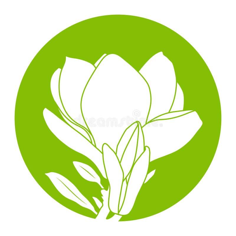 Magnolia flower stock illustration