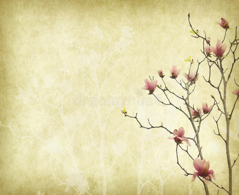 Magnolia flower with Old antique vintage paper. Background stock photography