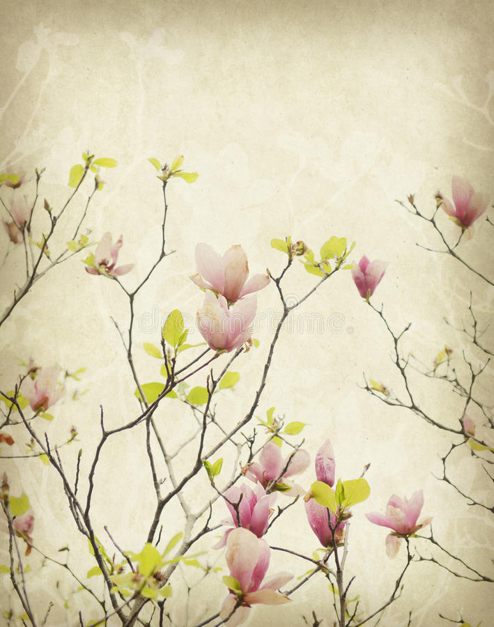 Magnolia flower with Old antique vintage paper. Background stock photos