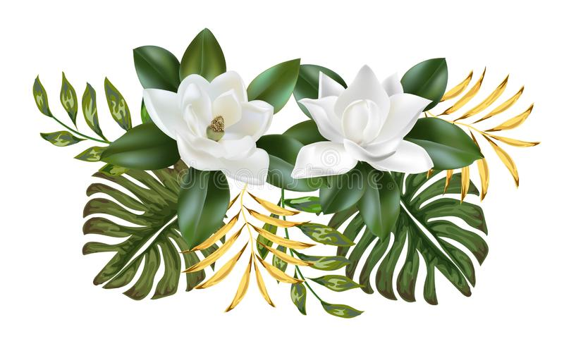 Magnolia flower white color beautiful nature royalty free illustration