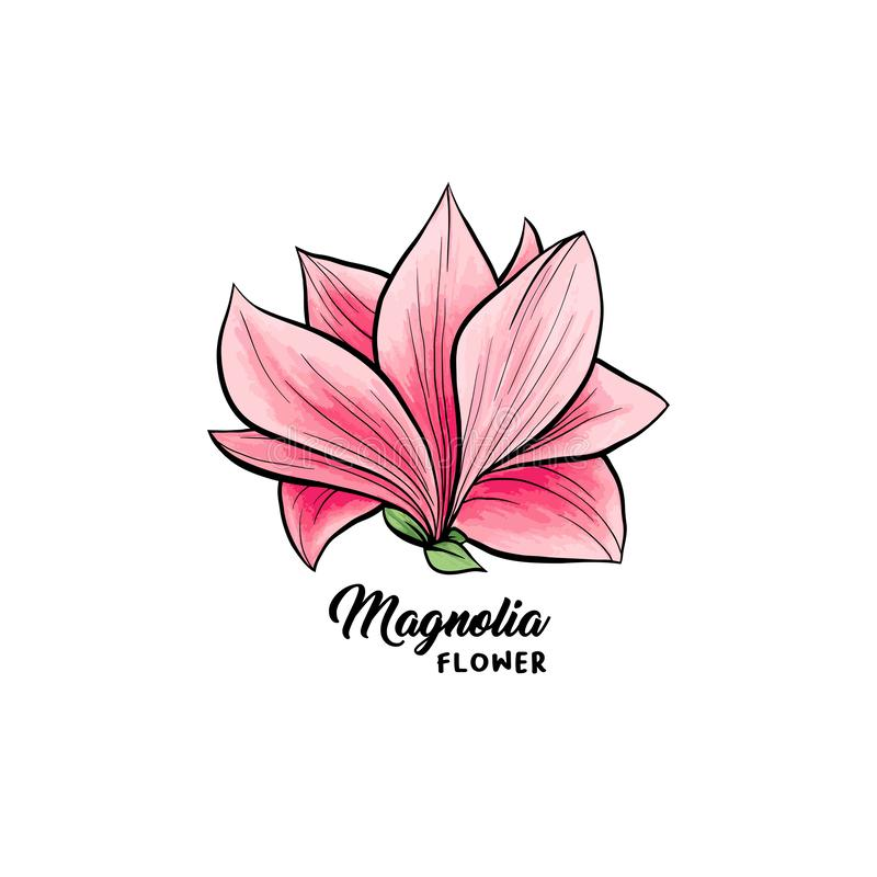 Magnolia flowers hand drawn illustration stock illustration