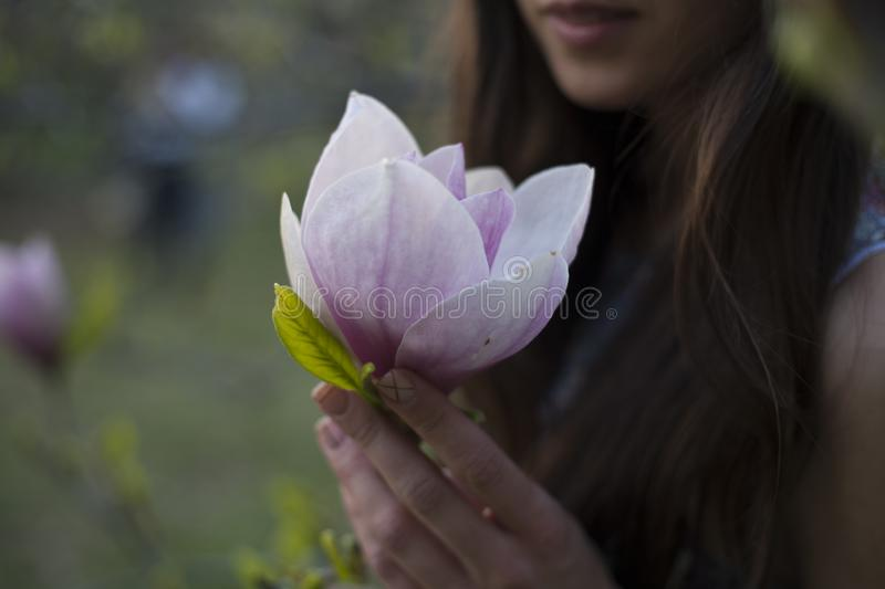 Magnolia in your hand. Magnolia in the girl`s hand. Beautiful flower. Purple magnolia bud stock images