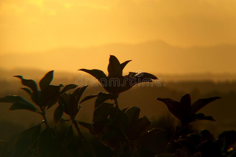 Magnolia leafs like flying birds. Magnolia leafs  flying birds. magnolia leafs  flying birds royalty free stock image