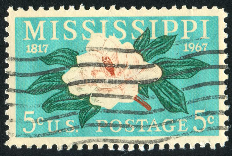 Magnolia illustration stock