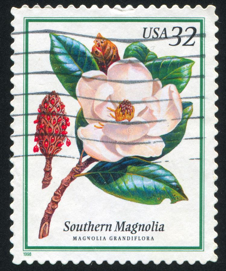 Magnolia meridional libre illustration