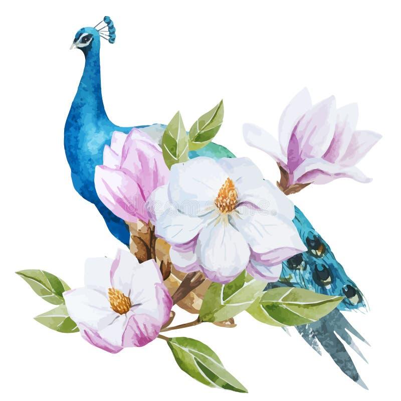 Magnolia and Peacock stock illustration