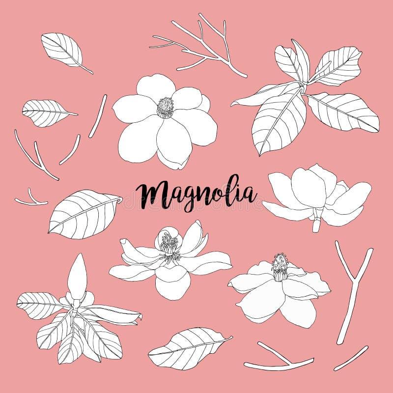 Magnolia setu liście i kwiaty Kwiecista wektorowa ilustracja bea royalty ilustracja